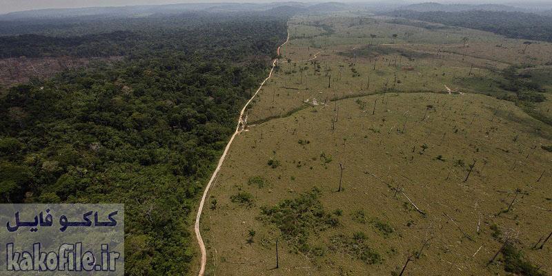 دانلود ترجمه مقاله اثرات مشاهده شده و پیش بینی شده خشکسالی بر حشرات جنگل