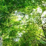 دانلود پاورپوینت نقش آمایش سرزمین در مدیریت بهینه جنگل های زاگرس